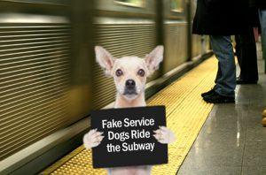 fake service dog ride the subway sign
