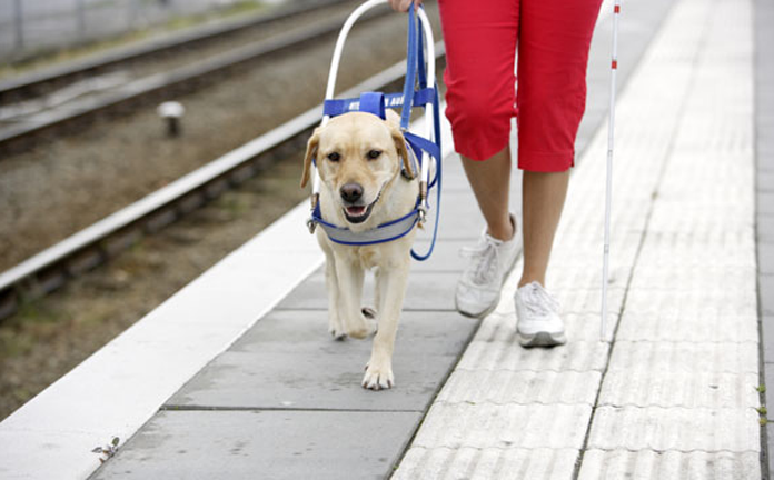 service animals walking platform