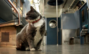cat on nyc subway car