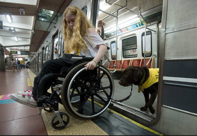 Service Animals and the New York Subway